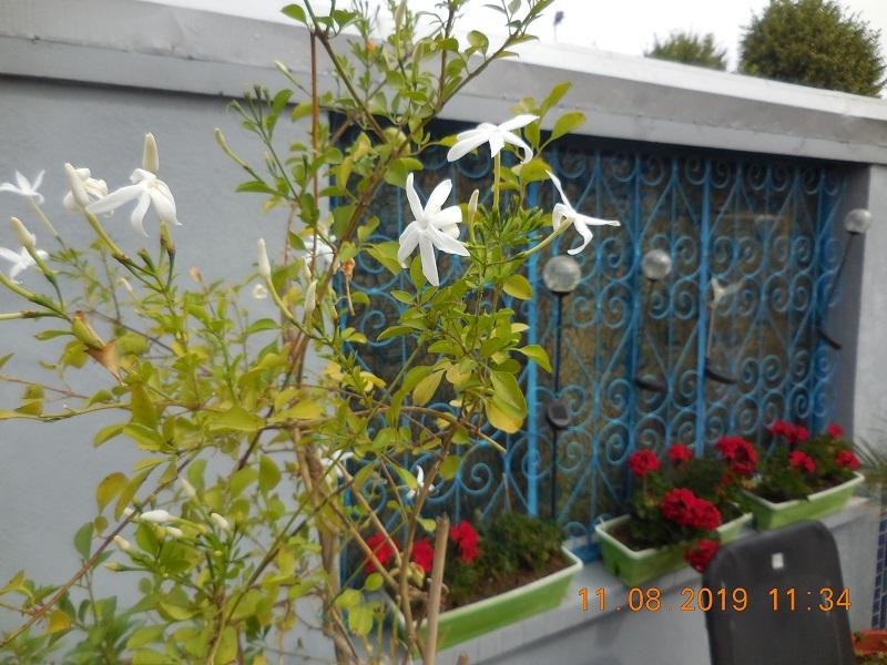 quelques plantes en fleurs Dscn1513