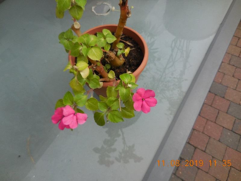 quelques plantes en fleurs Dscn1515