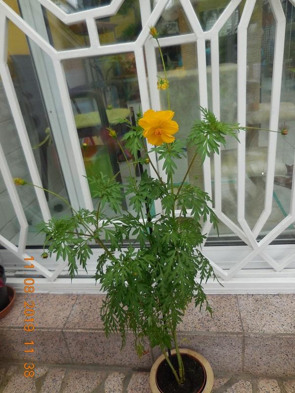 quelques plantes en fleurs Dscn1516