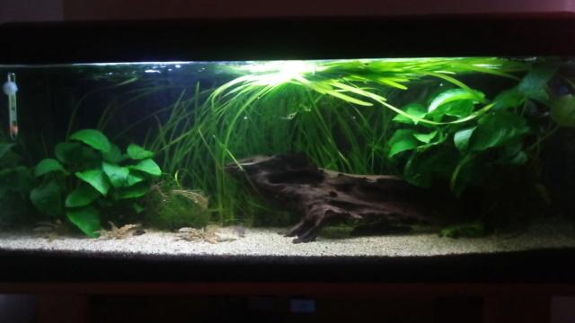 Le nouveau départ de mon aquarium - Page 2 P_201126