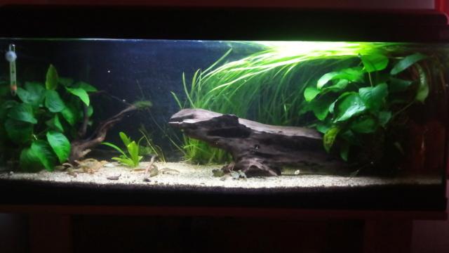 Le nouveau départ de mon aquarium - Page 3 P_201152