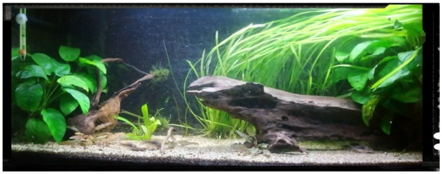 Mes escargots P_201154
