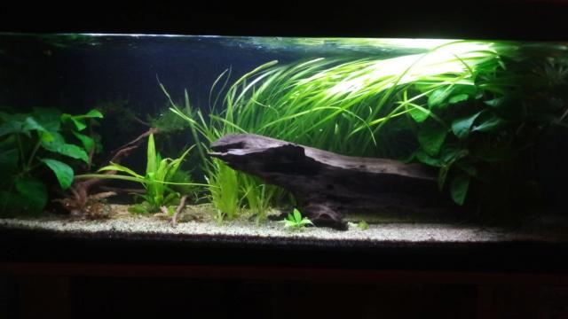 Le nouveau départ de mon aquarium - Page 3 P_201169