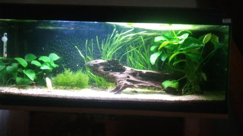 Le nouveau départ de mon aquarium - Page 2 P_201964