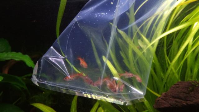 Le nouveau départ de mon aquarium - Page 3 P_202014