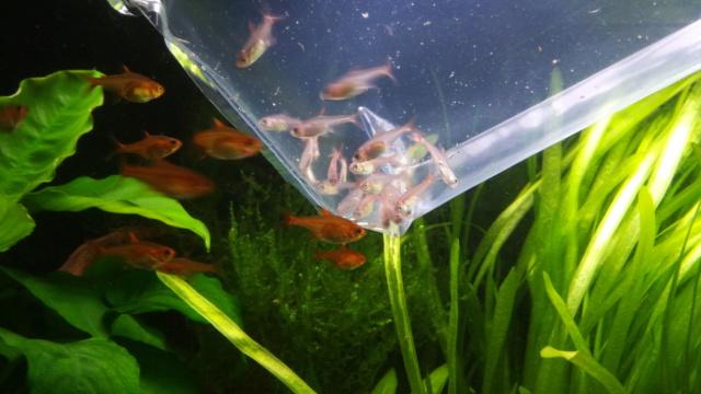 Le nouveau départ de mon aquarium - Page 3 P_202034