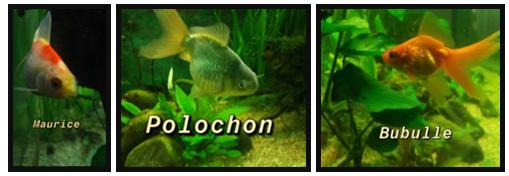 Démarrage aquarium  Poisso10