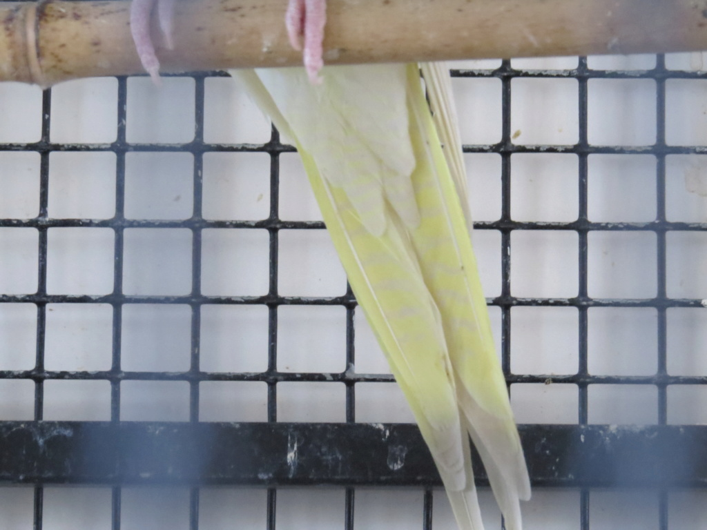 male ou femelle Img_2910