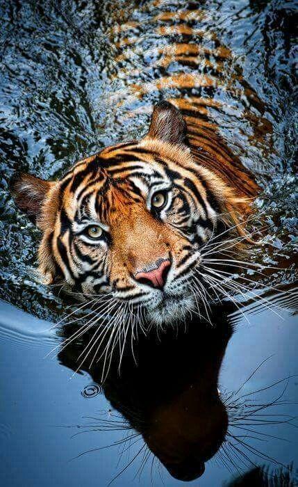 Fotos de animales de todo tipo incluyendo mascotas que más te gustan - Página 15 8d1b8110