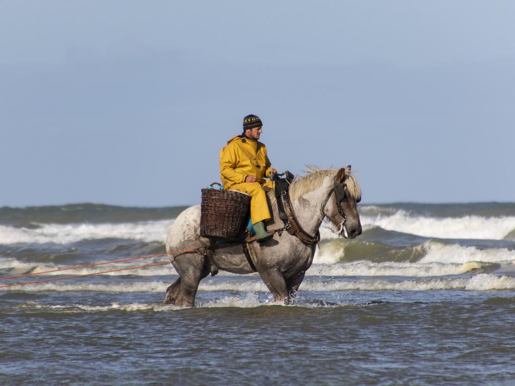 Pêche à la crevette à cheval   268a9911