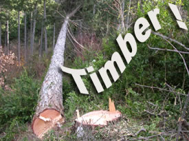 [Jeu] Association d'images - Page 4 Timber10