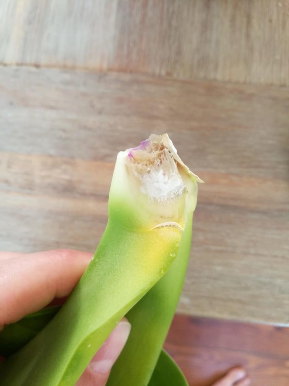 Hilfe, Phalaenopsis krank!  Photo-13