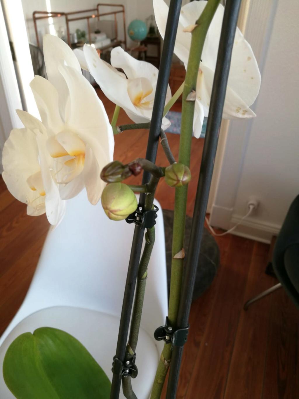 Hilfe, Phalaenopsis krank!  Photo-14