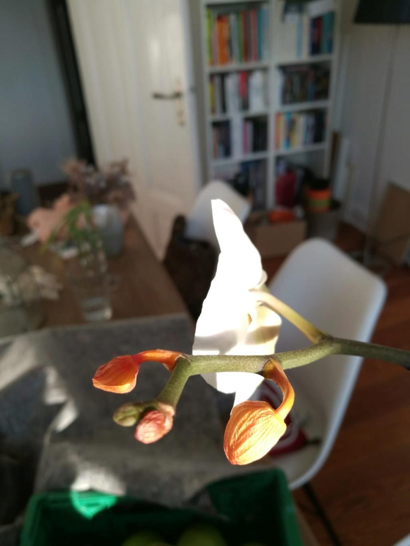 Hilfe, Phalaenopsis krank!  Photo-17