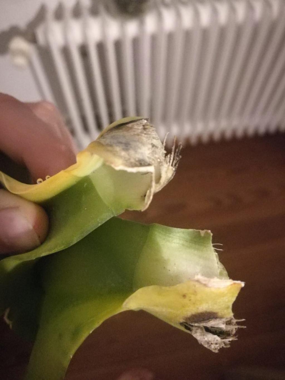 Hilfe, Phalaenopsis krank!  Photo-24