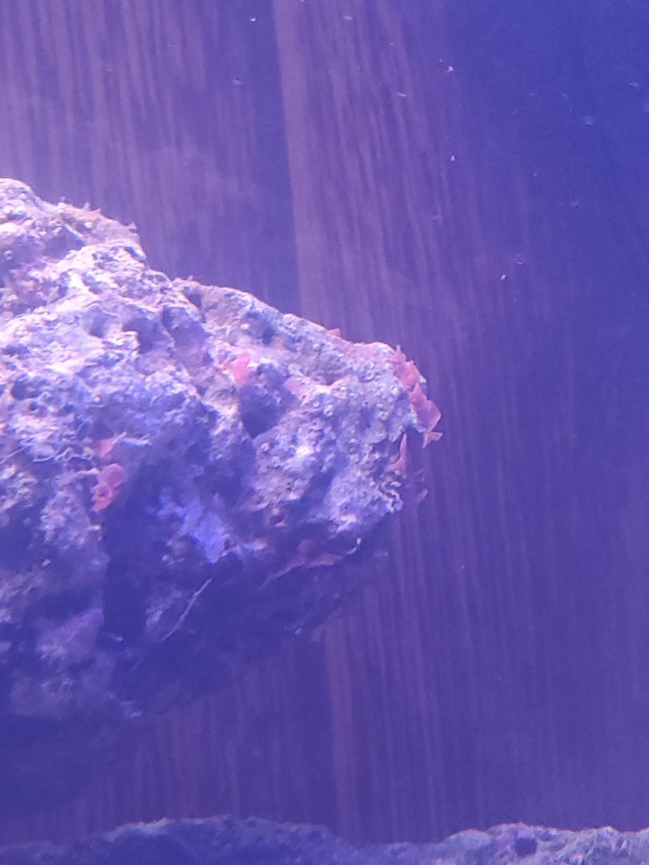 algues rouge sur pierres vivante  49761512