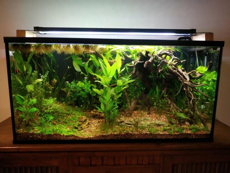 200L biotope asiatique Img_2012