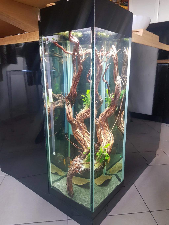 Problème nouvel aquarium 76762511