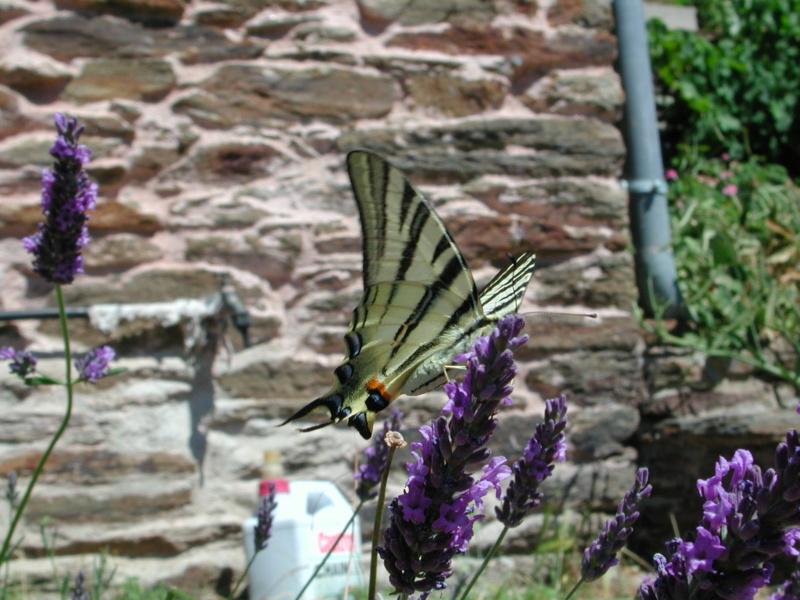 """Déficoncours """"Les insectes sur les plantes"""" - les participations Flambz10"""