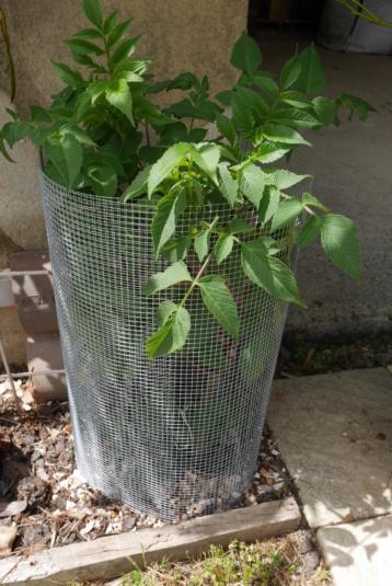 alerte limaces, escargots et autres ennemis des plantes - Page 3 P1020711