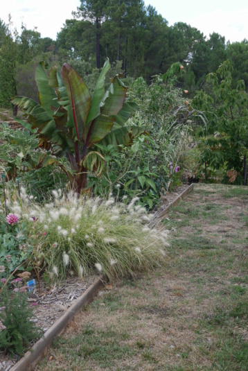 Rémi - Mon (tout) petit jardin en mode tropical - Page 18 P1020819