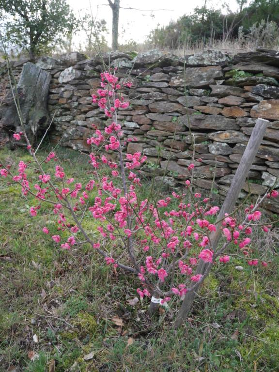 Panier fraîcheur Prunus10