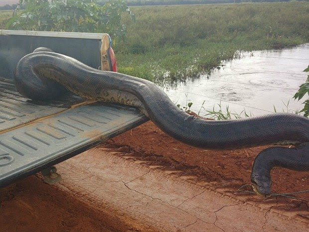 A Misteriosa Anaconda Img-2010
