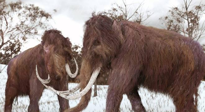 Mamutes Voltarão a Vida em Breve Sob13