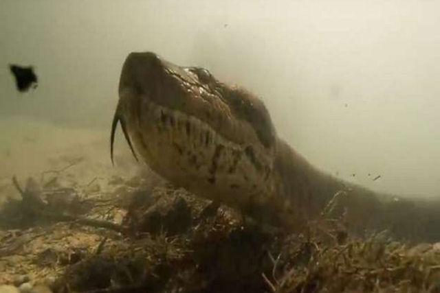 A Misteriosa Anaconda Sobre137