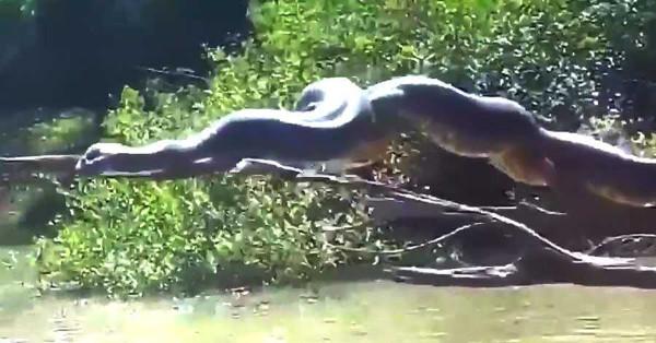 A Misteriosa Anaconda Sobre138