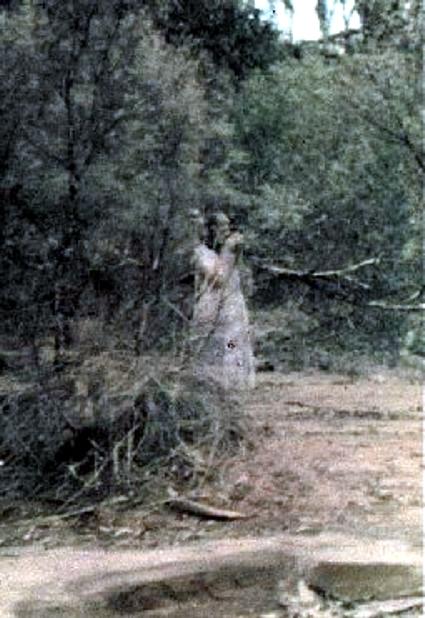 Fantasma no Bosque Sobren77
