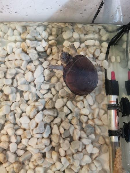 identification tortue d'eau 18385410