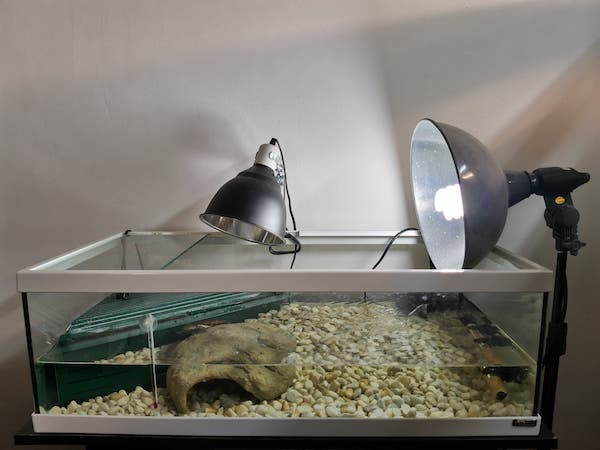 ma tortue veut s'échapper 18429011