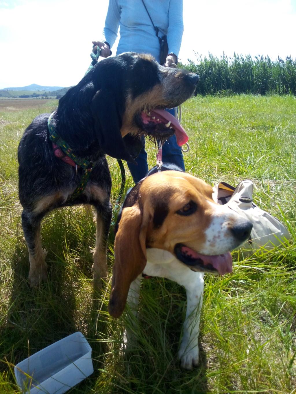 REINE (femelle croisée beagle)  - Page 2 Img_2016