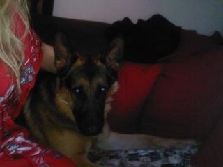 Max, très beau BA de 2 ans, RP K511