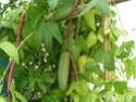 regardez ces légumes Les_va16