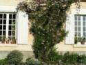 clématite montana Pict2210