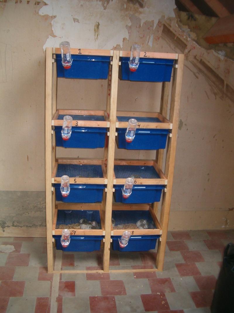 Racks élevage Mastomys Hpim8112