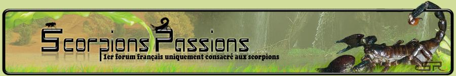 Scorpions Passions