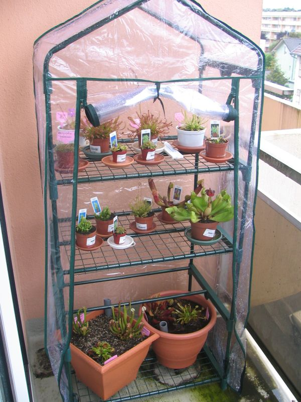 Postez ici vos terrariums serres et tourbieres Img_8210