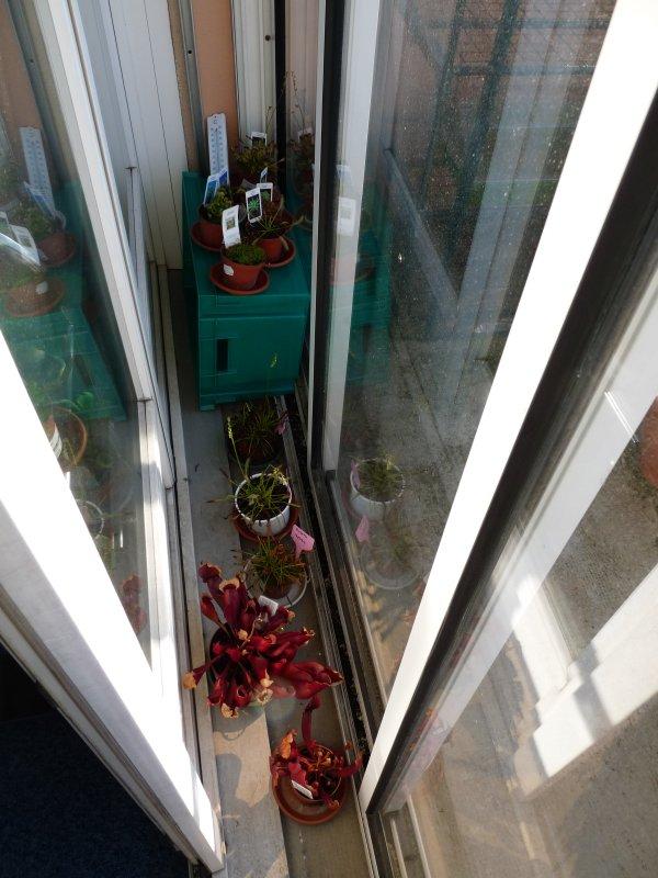 Postez ici vos terrariums serres et tourbieres Instal10