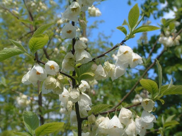 En fleurs! Dscf8610