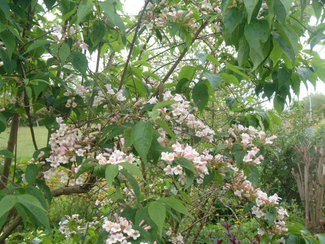 En fleurs! Dscf8612