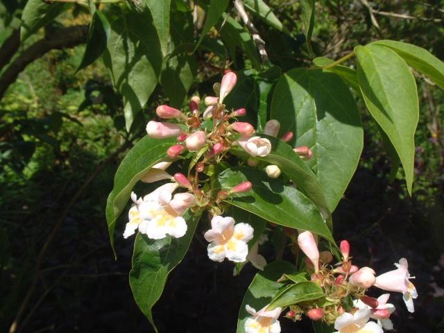 En fleurs! Dscf8613
