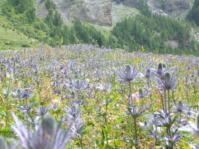 Les Hautes-Alpes Dscf8910