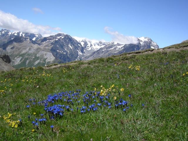 Les Hautes-Alpes Dscn1735