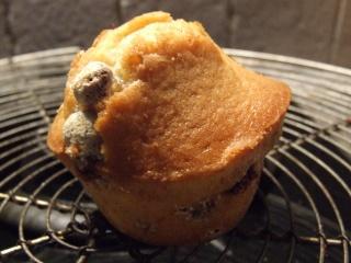 muffins - Page 5 Photo_32
