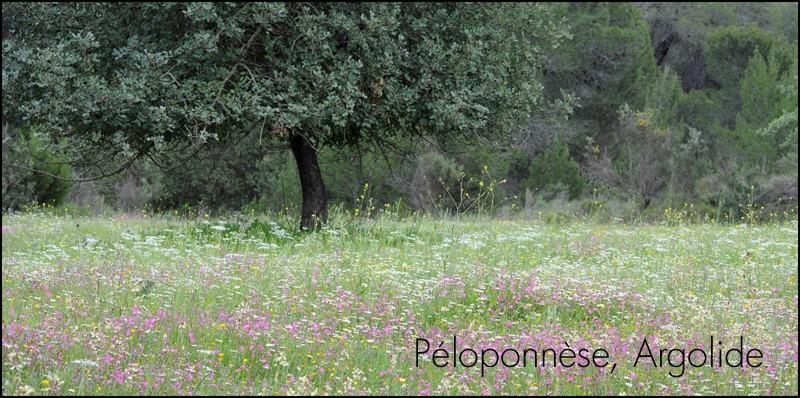 [Grèce] Péloponnèse, Eubée et Mont hymittos Dsc_0310