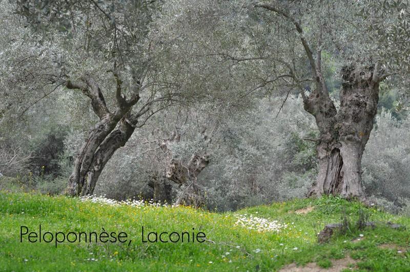 [Grèce] Péloponnèse, Eubée et Mont hymittos Planch29