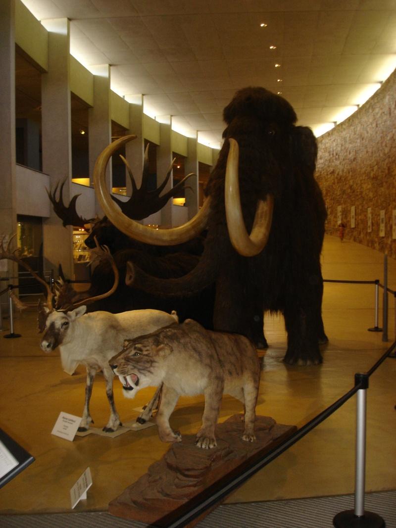Musée de Préhistoire de Quinson Champi13